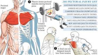 chest muscle strain picture 11