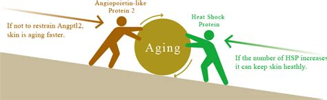 an aging protein picture 3