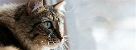 crusty skin condition in cats picture 7