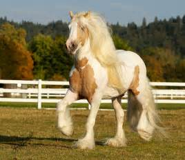 loss of weight in horses picture 5