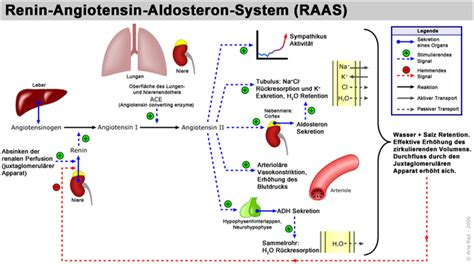 adrenal fatigue and low thyroid function picture 11