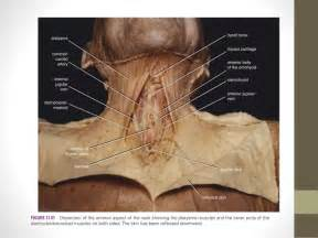 and thyroid picture 2