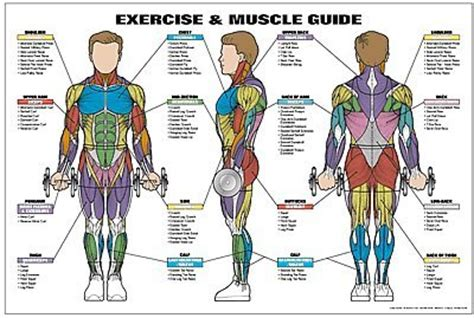 abdominal muscle pulls picture 10