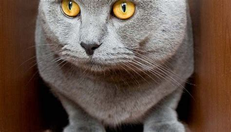 why cats loose their appees picture 17