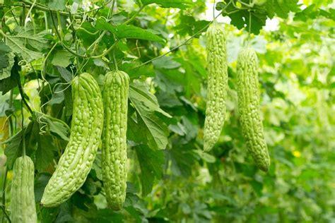 larawan ng herbal plants picture 1
