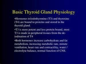 elevated t3 thyroid hormone picture 14