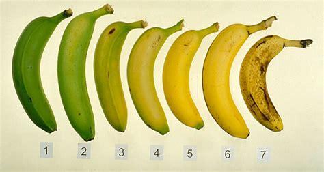 plantain penis picture 6
