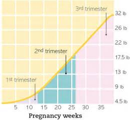 second trimester appetite picture 1