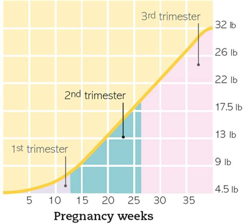 weight loss in second trimester picture 2