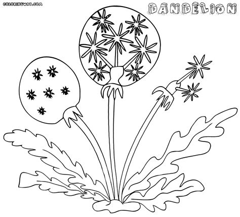 dandelion coloring picture 14