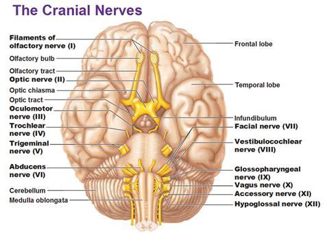 cranium pills picture 15