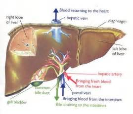 dcth liver cancer picture 11