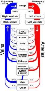 algorithym for calculation of transit time blood flow picture 5