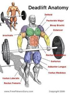 testosterone levels working out picture 11