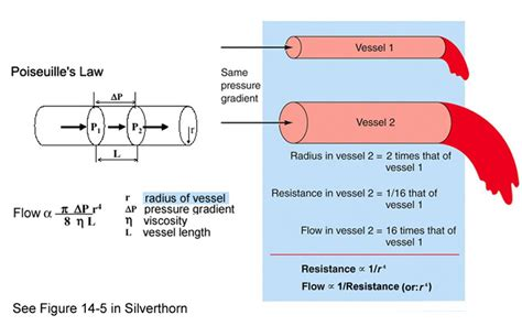 increased blood flow resistance to nodule picture 3