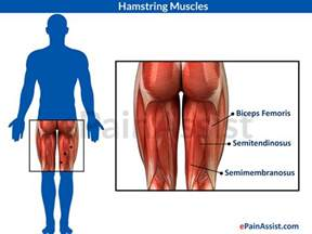 hamstring muscle injuries picture 10