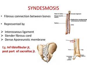 fibrous joint picture 18