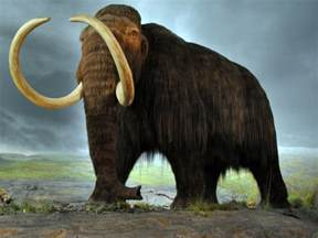 mammoth h picture 7