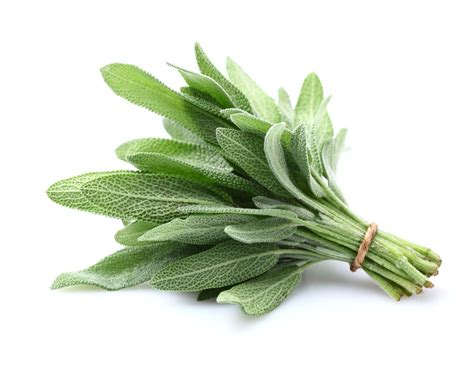 salvia for skin picture 9