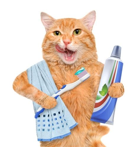feline teeth cleaning picture 1