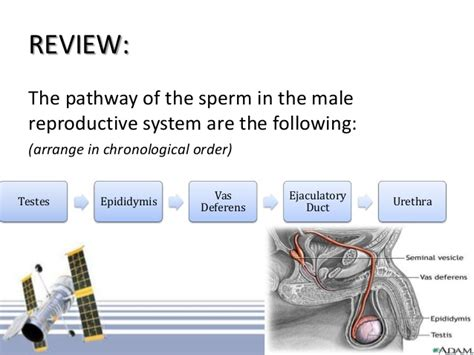 bladder and prostate picture 17