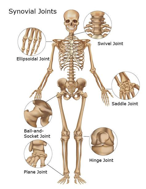 function of joints picture 7