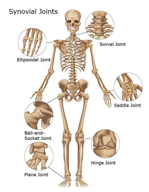 bones joints picture 1