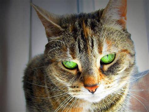 feline pain relief treatments picture 17
