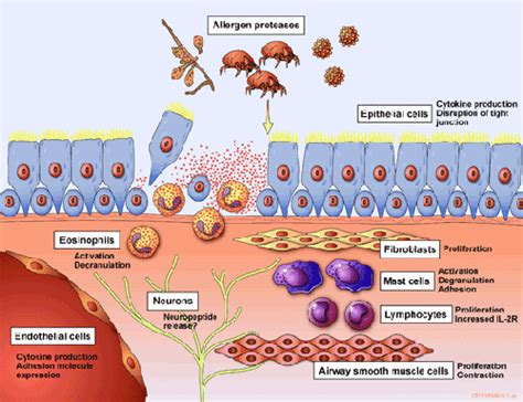 what is hirohito disease picture 7