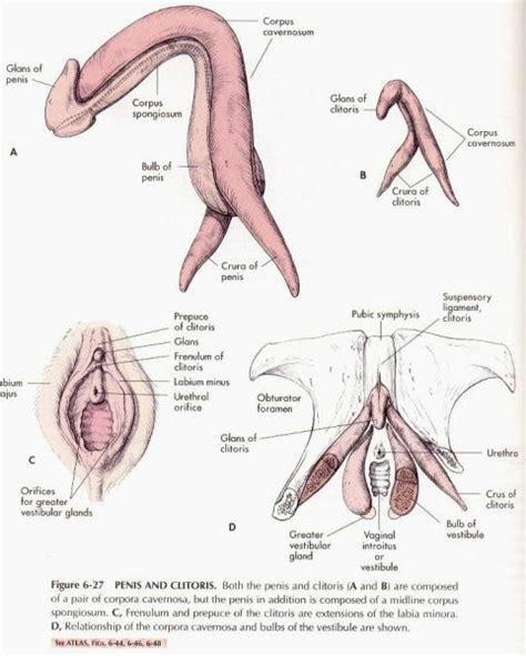 testosterone gel on genitals picture 7
