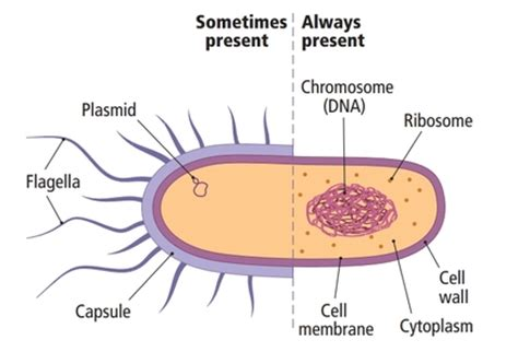 what is it when you have ongoing bacterial picture 8