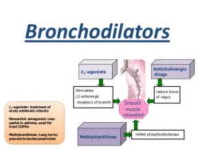 bronchial smooth muscle picture 1