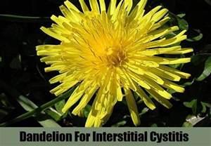 dandelion tea and herpes symptoms picture 5