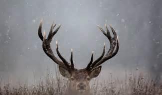 will deer antler spray make your bigger picture 15