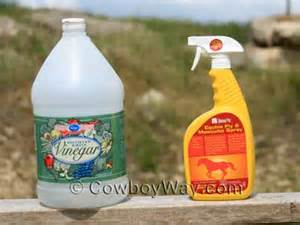 equine fly spray homemade picture 10