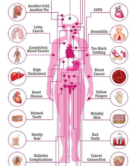 effect of mestrogen in d body picture 1