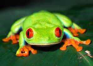 diet for a frog picture 5