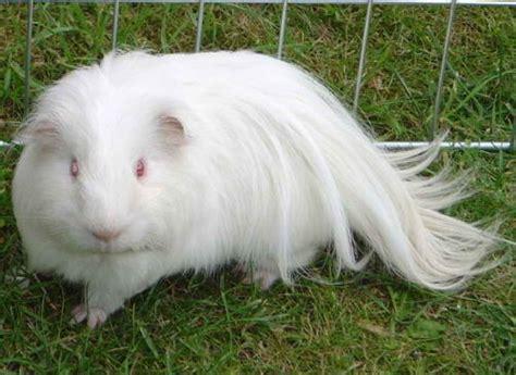 best hair dryer picture 10