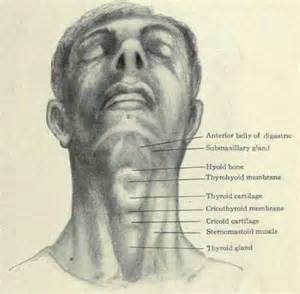 thyroid books picture 2