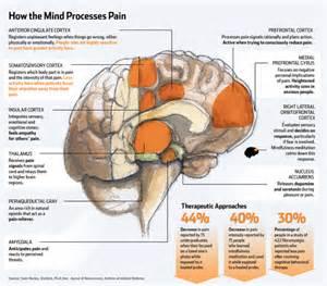 natural herbal opioid receptors picture 10