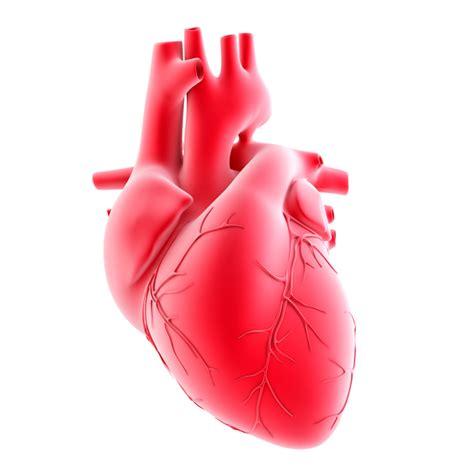coronary heart disease picture 7