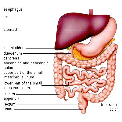 gastrointestinal diet picture 2