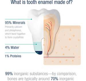 forming of enamel in permanent teeth picture 10