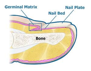 clear nails pro solution side effects picture 3