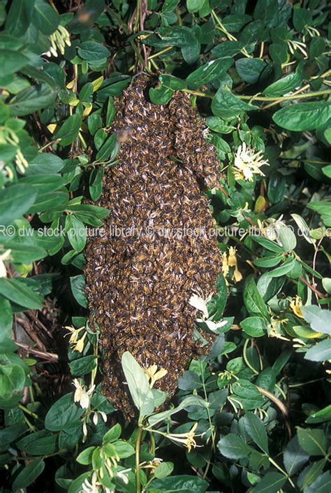 bee hives australia picture 2