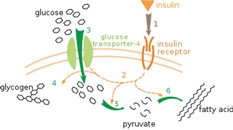 diabetes and liver function picture 10