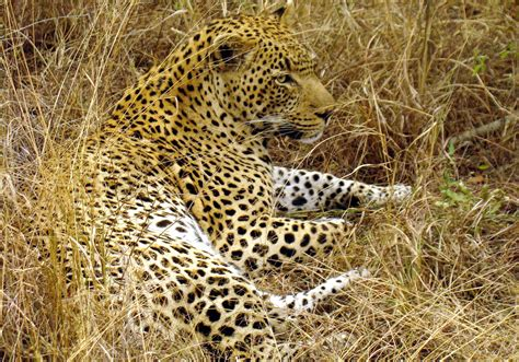 what is the sleeping pattern for a cheetah picture 9
