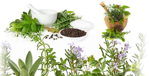 what herbal medicine in the philippines can use picture 6