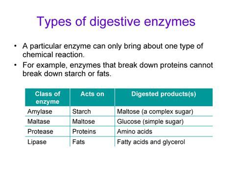 name two end products of fat digestion picture 4