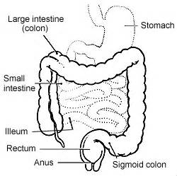 what percentage of mes found in the colon picture 7